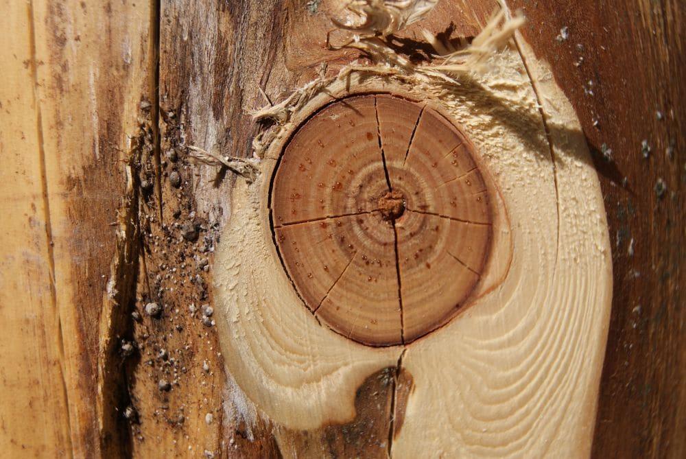 Naturholz Astloch - urwüchsiges Holz